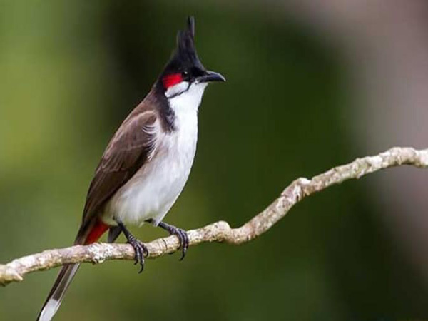 Nằm mơ thấy bắt được chim đánh con gì ăn chắc, là điềm báo gì